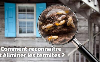 Comment reconnaître et éliminer les termites ?